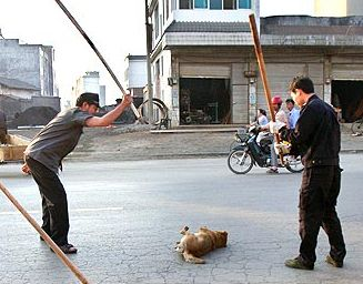 dog%20beating%20in%20china1.jpg